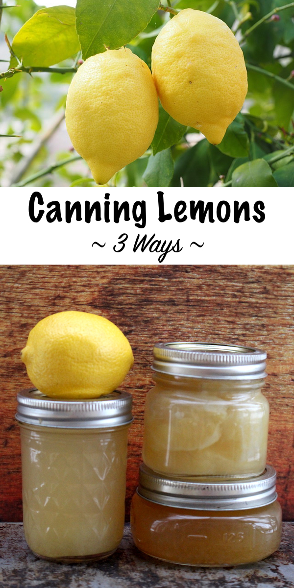 Canning Lemons at Home ~ Three Canning Recipes for Lemons including juice, jam and whole fruit ~ Plus ideas for lemonade concentrate, lemon curd and other lemon preserves. #lemons #canning #foodpreservation #homesteading #selfsufficiency #prepper #shtf