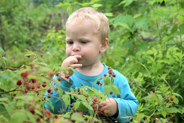 Child Foraging Raspberries