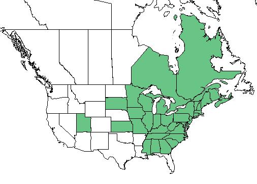 Staghorn Sumac Range