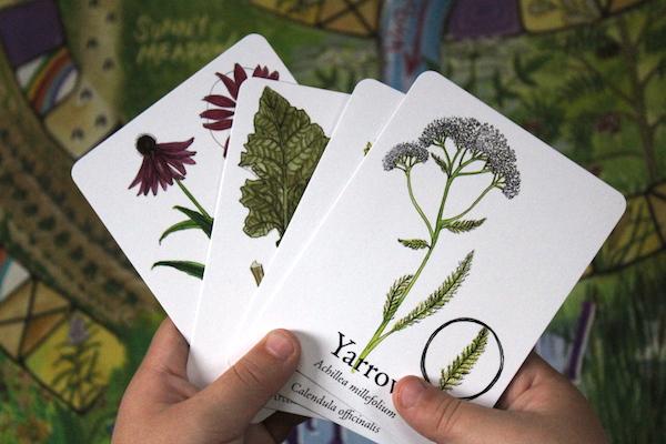Wildcraft Board Game Herbal Teaching Tool