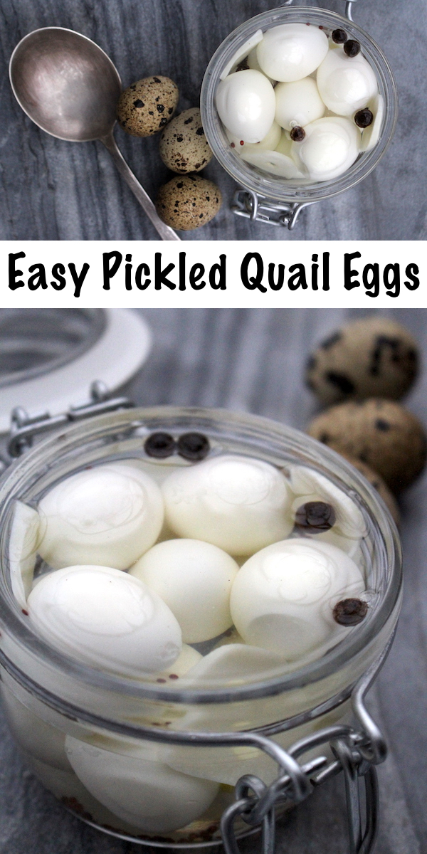 easy pickled quail eggs recipe ~ How to hard boil quail eggs, plus the easiest way to peel quail eggs ~ Easy homemade recipes for pickled quail eggs #quail #recipes #eggs #pickles #pickledegg #foodpreservation #homesteading