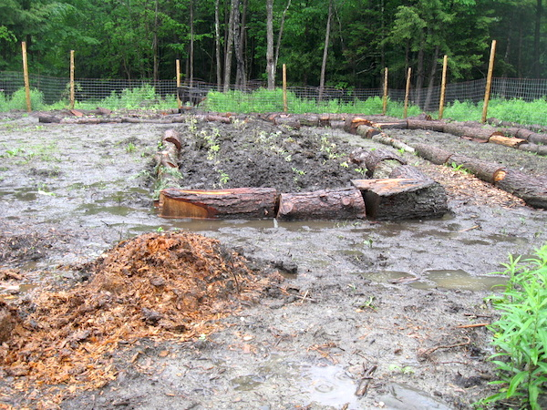Cordwood raised beds to buffer garden flooding