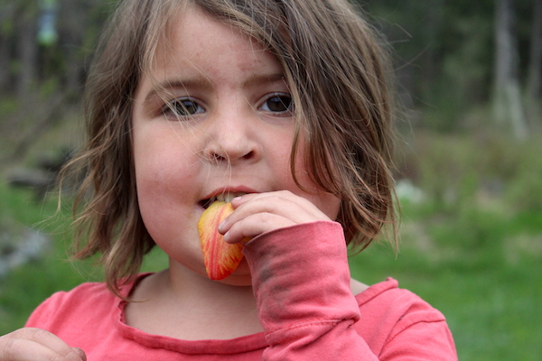 child eating edible tulip petals