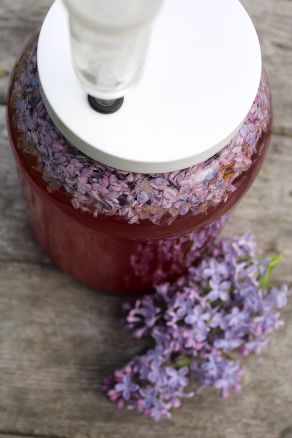 homemade lilac wine brewing in primary with the blossoms still in the wine