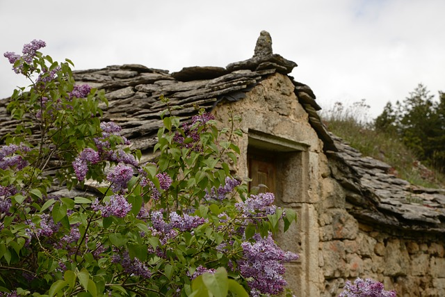 old stone house surrounded by lilacs
