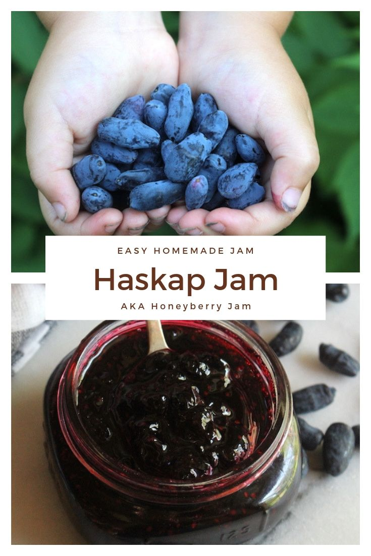 Homemade Haskap Jam (Honeyberry Jam) ~ Honeyberries are tasty fruits that come from a perennial plant in the honeysuckle family.  They taste like a cross between blueberries and grapes, and make a lovely sweet/tart jam. #haskap #honeyberry # #jamrecipes #jam #canning #foodpreservation #preservingfood #homestead #selfreliant #selfsufficiency #homesteading
