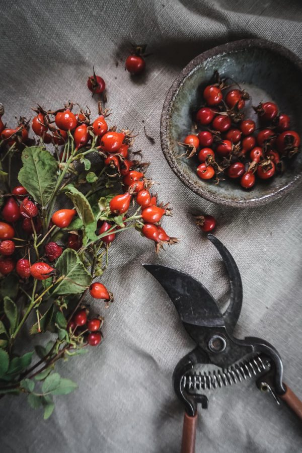 branches of rose hips on table with pruners