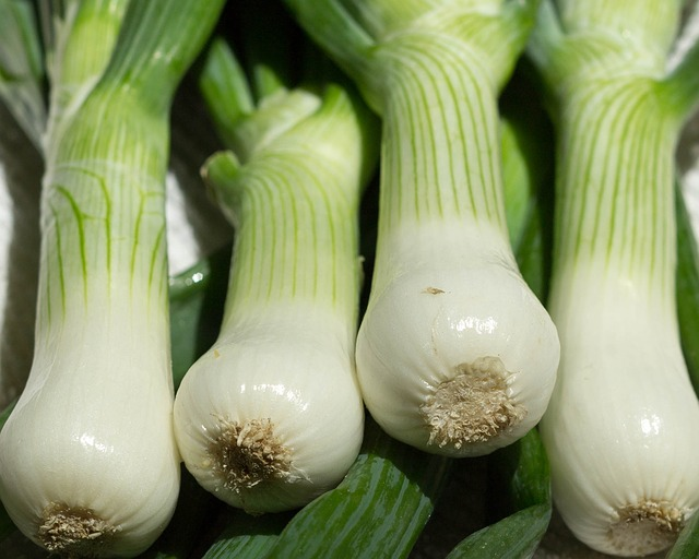 Scallions or green bunching onions are a perennial vegetable.