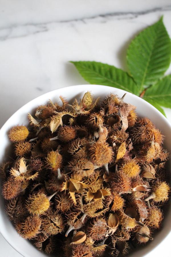 Foraging Beechnuts