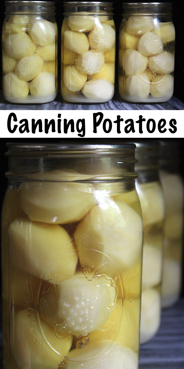 Canning Potatoes ~ How to Can Potatoes ~ Potatoes are a great candidate for home canning, and a jar of home canned potatoes makes for a quick and easy meal. Learn how to pressure can potatoes for long term storage, plus a few reasons why canning potatoes is an efficient way to store potatoes. #canning #selfreliance #homesteading #foodpreservation #traditionalskills