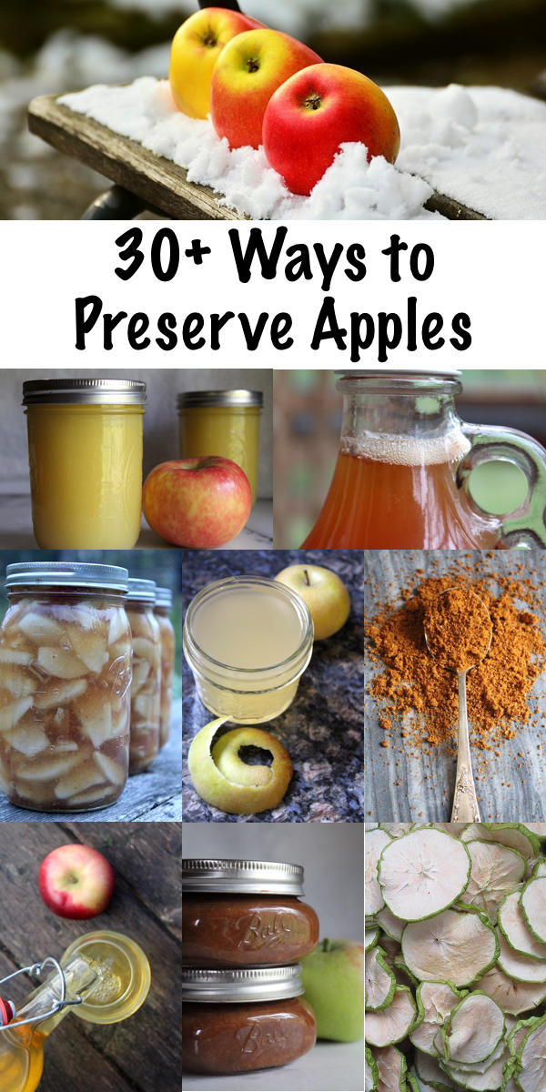 30+ Ways to Preserve Apples ~ Historical and modern apple preservation techniques to put up the apple harvest this fall. Looking for the ultimate guide to preserving apples? Look no further! #selfreliance #preservation #foodpreservation #canning #fall #applerecipes