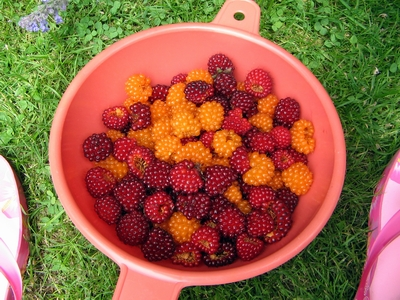 Salmonberries in a bowl