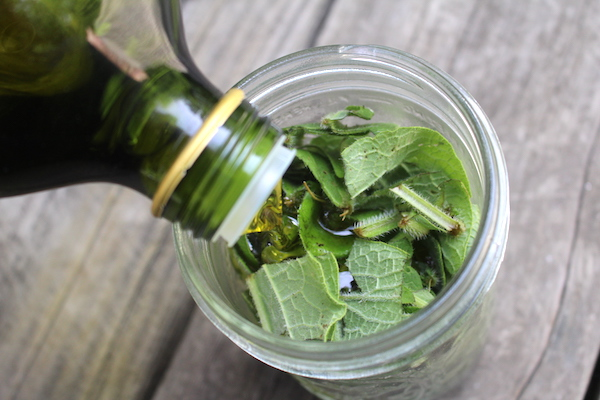 Pouring oil over comfrey leaves to make an infused oil.