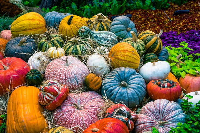 Pumpkin preservation methods also extend to other varieties of winter squash too!