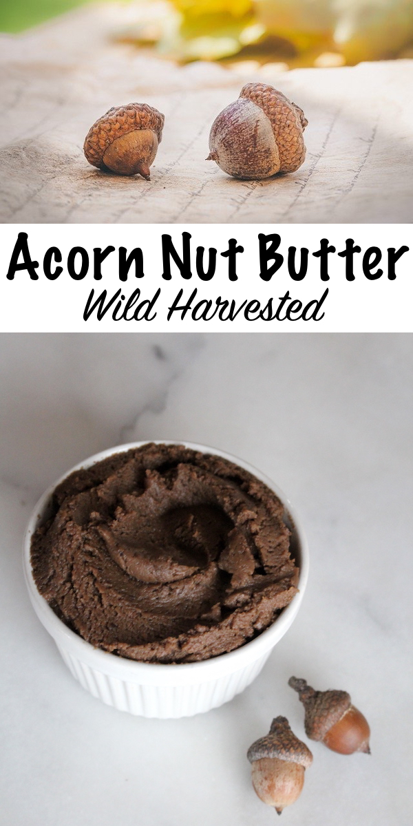Acorn Butter ~ Learn how to process wild harvested acorns into a homemade acorn nut butter. (Plus, how to make acorn butter cookies!) #foraging #acorn #acornrecipes #wildfood