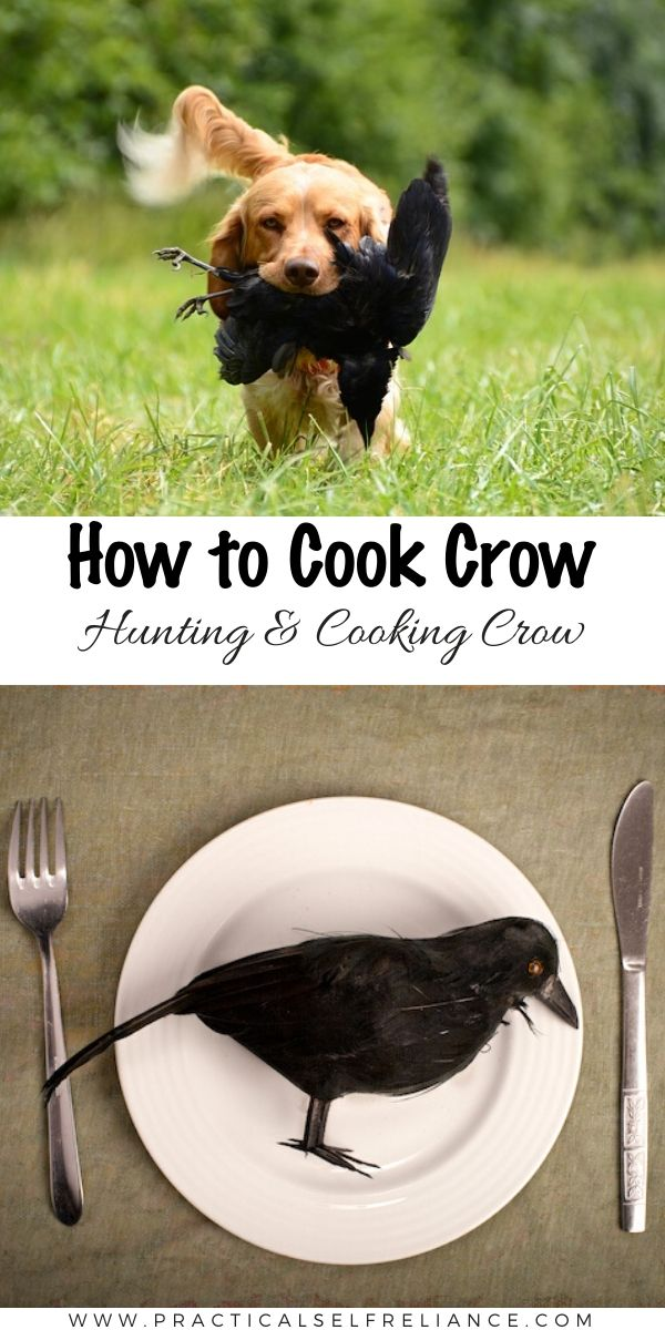 How to Cook Crow (Hunting and Eating Crow) ~ Eating crow is one of those old sayings nobody really knows where it came from, and few people are interested in finding out.  There was a time though, that people did really cook and eat crow, and believe it or not crow hunting is still regulated in many states, just like deer hunting and turkey hunting. #hunting #smallgame #wildfood #wildgame
