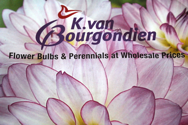 K. van bourgondien catalog