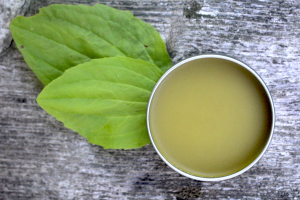 Plantain Salve is generally used for minor cuts and abrasions.