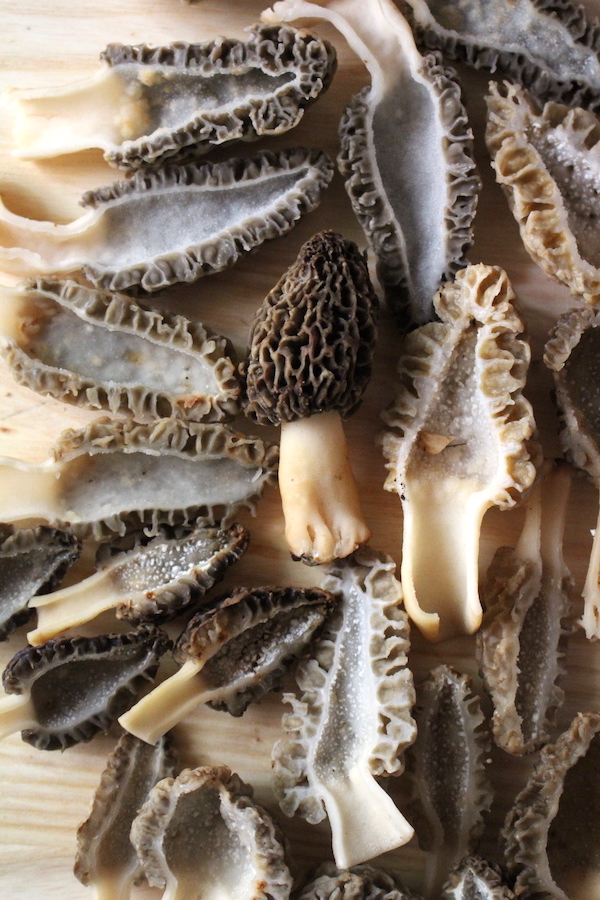 Cross section of morel mushrooms showing the hollow insides.
