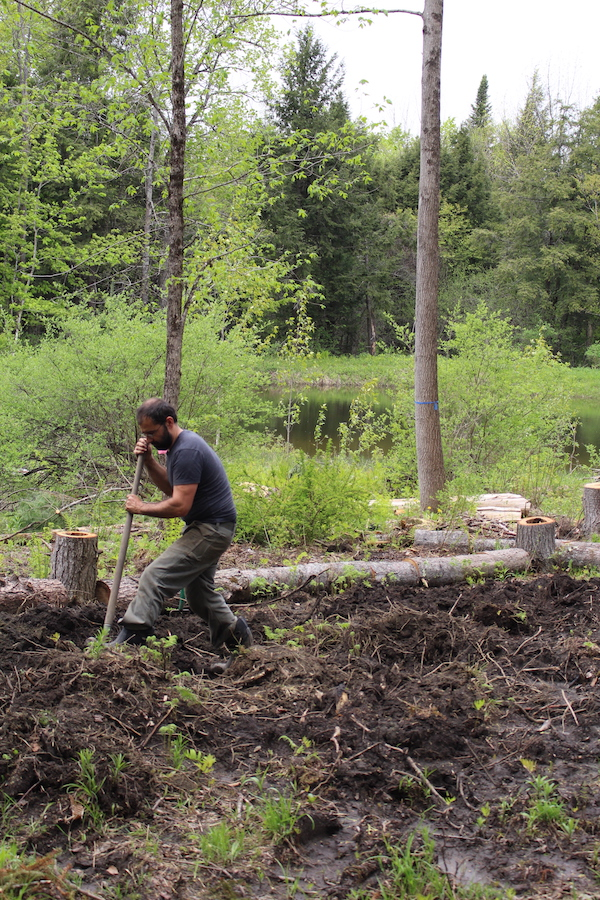 Turning woodland soil by hand to break up tree roots and prepare for planting. We chose a location right next to the pond for easy watering (and sun exposure).