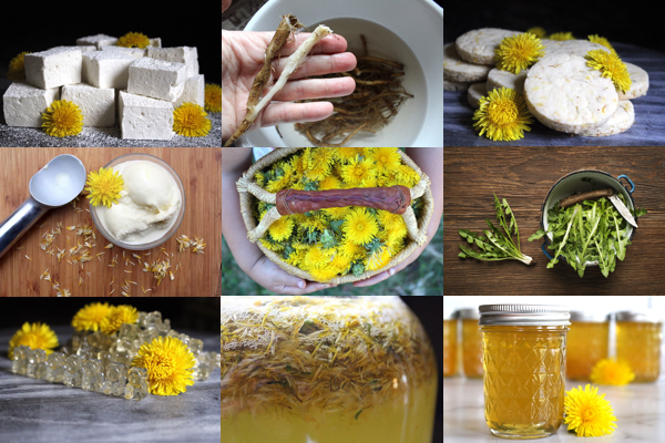 Dandelion Recipes ~ Examples of ways to use dandelions