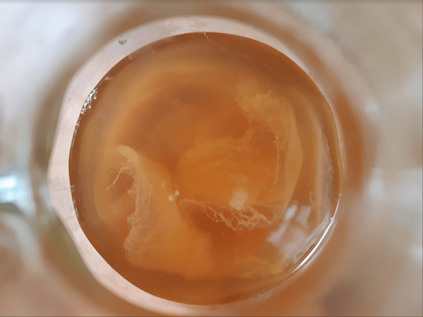 Vinegar Mother in Apple Cider Vinegar