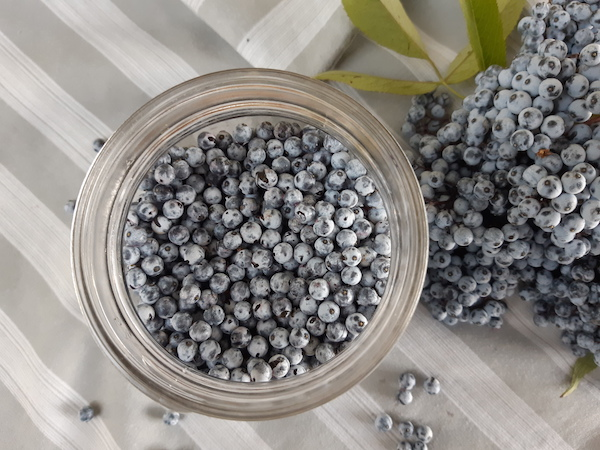 Blue elderberries in a jar for water infusion