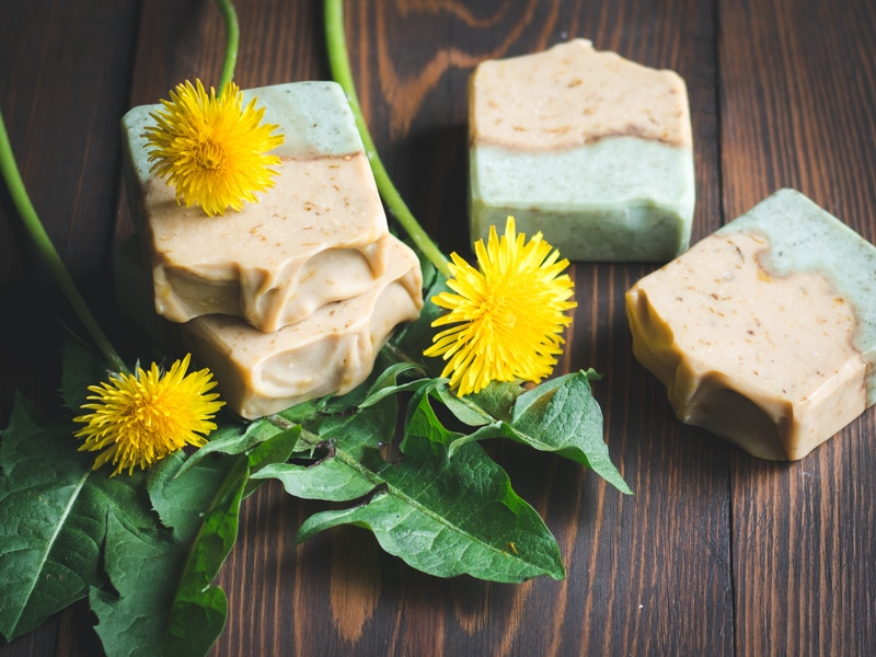Dandelion soap made with the whole plant (Image Courtesy of Grow Forage Cook Ferment)