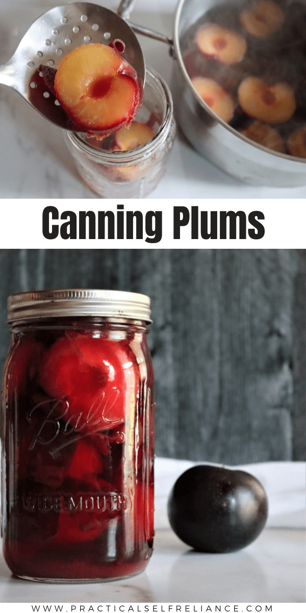 How to Can Plums ~ Canning plums is a simple way to preserve plums at home with just a water bath canner. Can plums in syrup, water or juice.