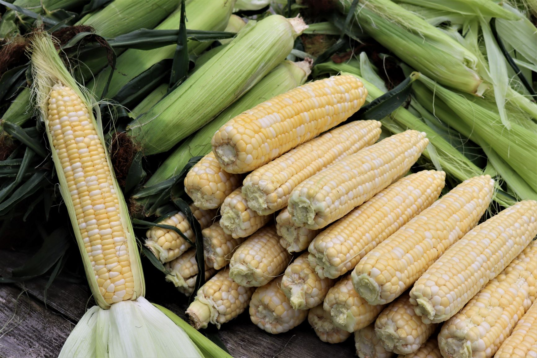 Corn for Canning