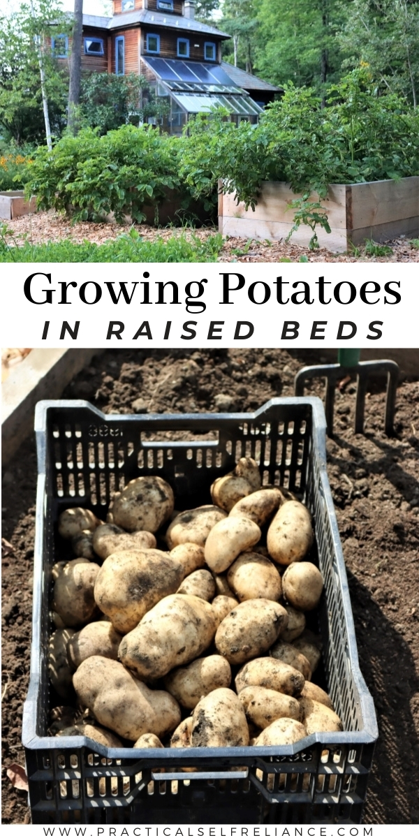 Growing Potatoes in Raised Beds