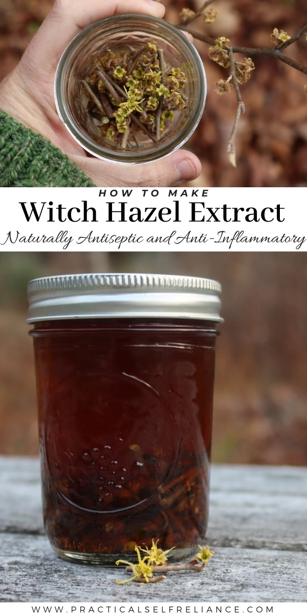 How to Make Witch Hazel Extract