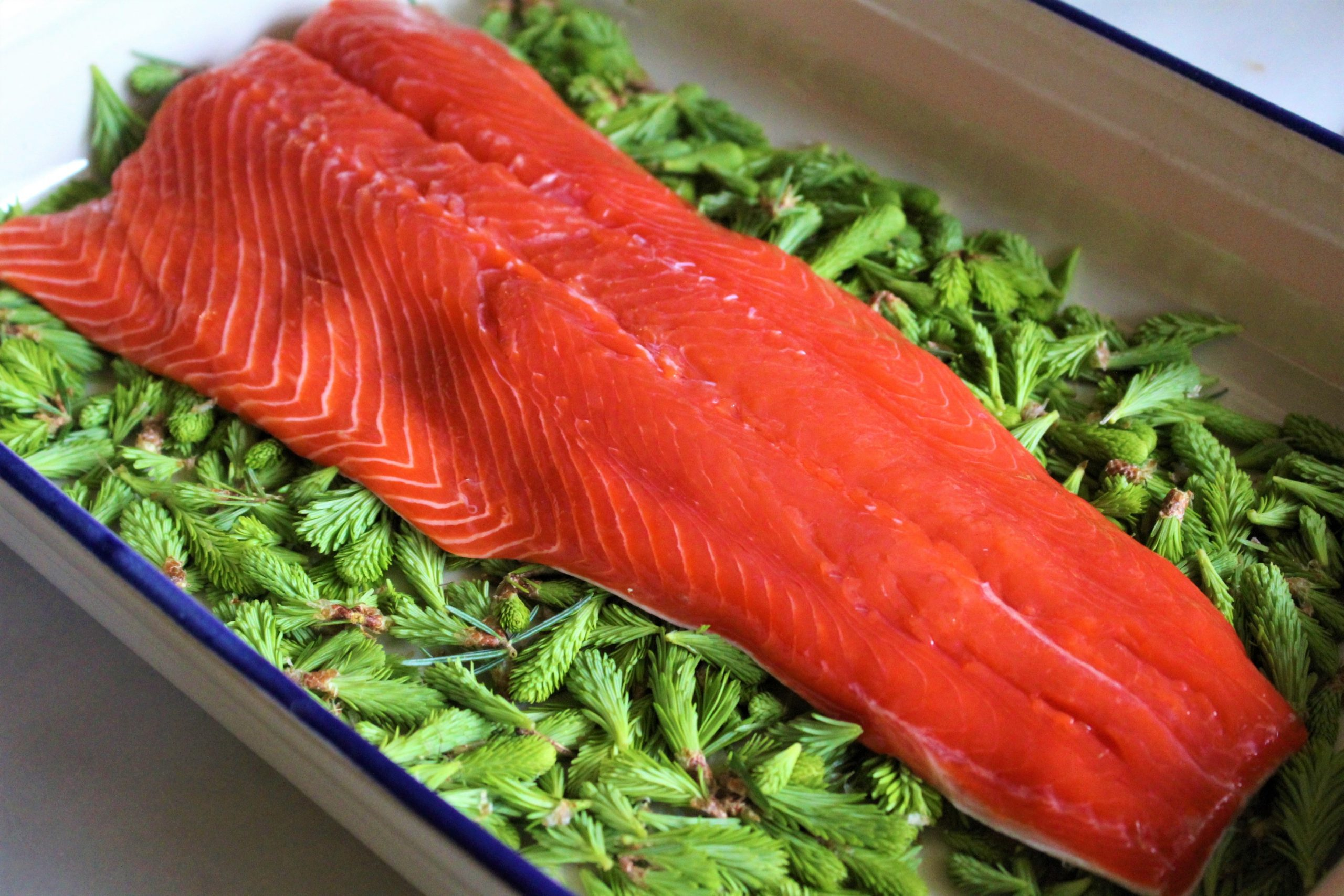 salmon ready for salt curing to make homemade gravlax