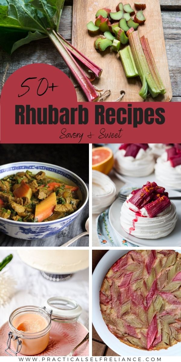 50 Rhubarb Recipes