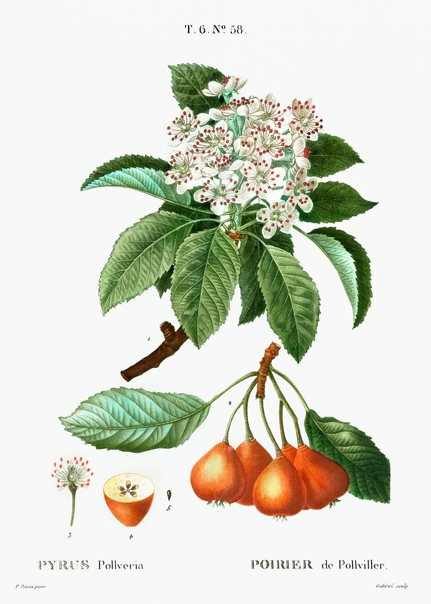 Shipova Botanical Drawing