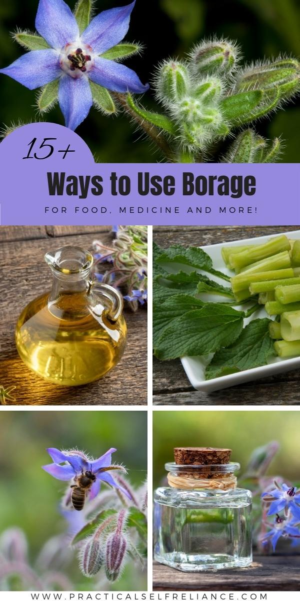 Ways to Use Borage
