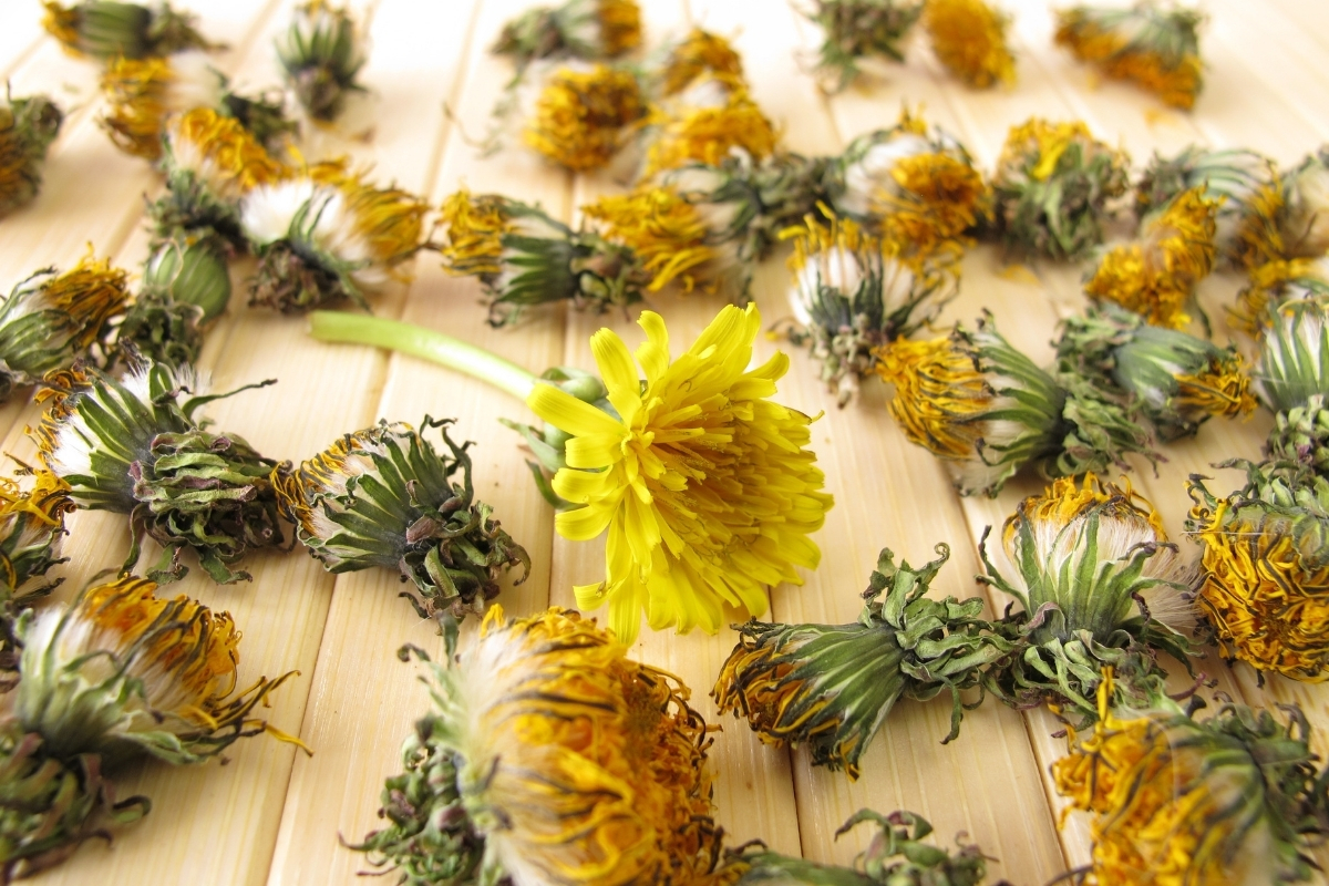 Drying Dandelion Flowers