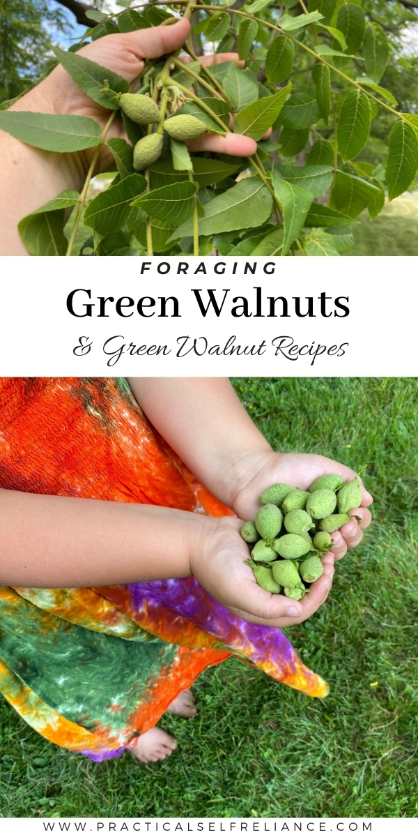 Foraging Green Walnuts (And Green Walnut Recipes)