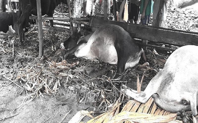 भ्यागुते रोगबाट पशु चौपाया मरे