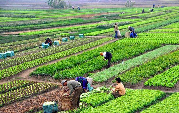 खोटाङमा प्रधानमन्त्री कृषि आधुनिकीकरण परियोजनाको बजेट दुई करोड