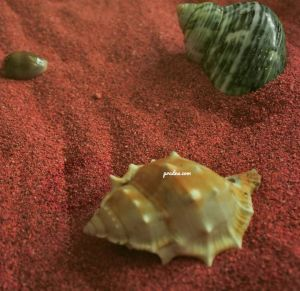 fotografi kepompong dan pasir merah