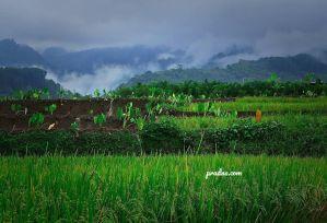 sawah bukit hijau dan awan putih banyumas
