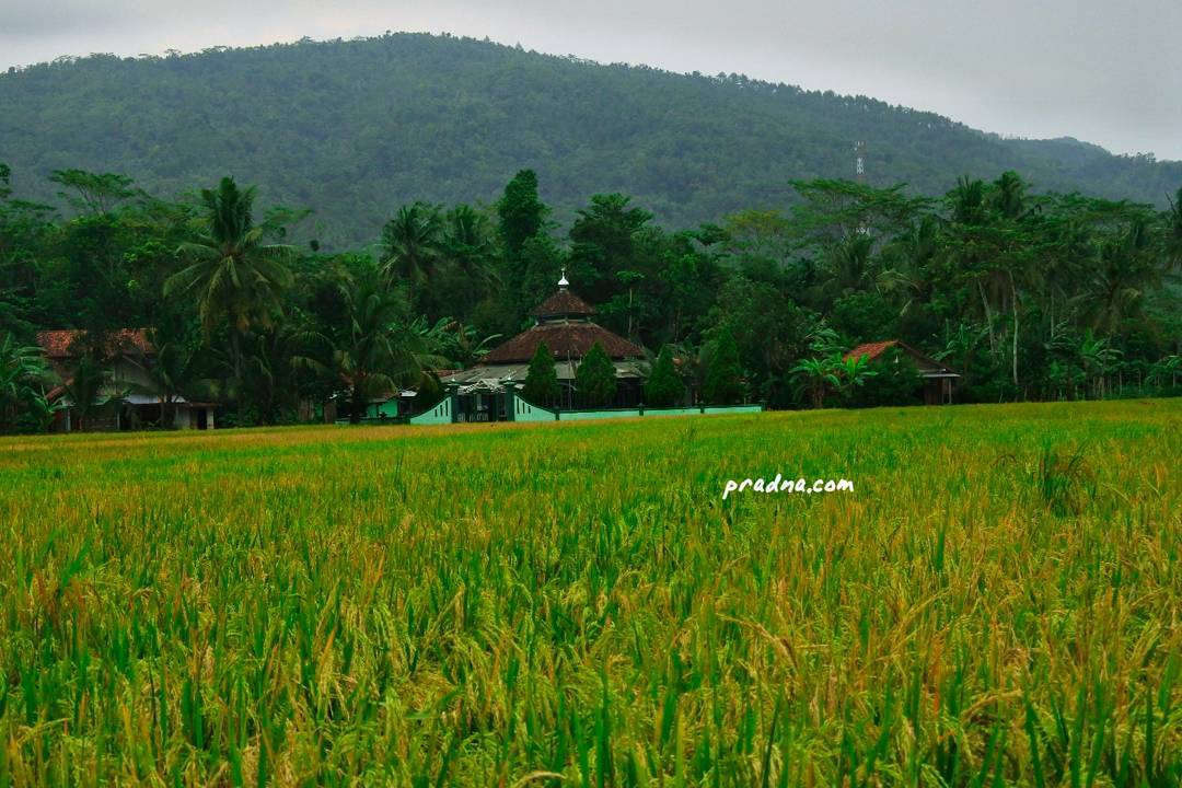 foto grafi sawah masjid bukit desa wlahar wetan banyumas
