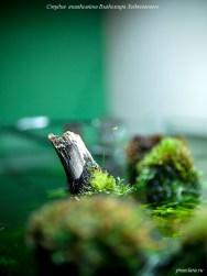 Коряги на поверхности аквариума, оформление аквариума