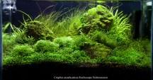 Оформление нано-аквариума, аквадизайн, ивагуми