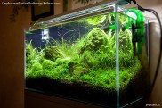 Оформление нано-аквариума, аквадизайн