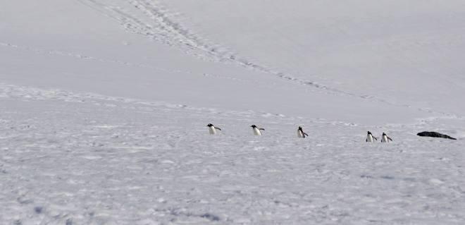 photos_and_videos/AntarcticaPenguins_10155338149716869/18121455_10155338153116869_3688322065698057910_o_10155338153116869.jpg