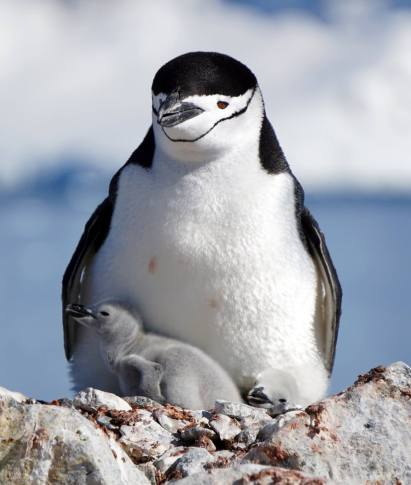 photos_and_videos/AntarcticaPenguins_10155338149716869/18121629_10155338172356869_8533518802090173532_o_10155338172356869.jpg
