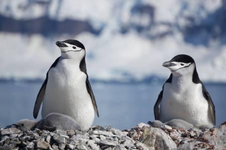 photos_and_videos/AntarcticaPenguins_10155338149716869/18193279_10155338172531869_5247515609915101402_o_10155338172531869.jpg