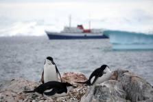 photos_and_videos/AntarcticaPenguins_10155338149716869/18208931_10155338150161869_110078878778095385_o_10155338150161869.jpg